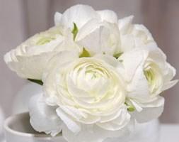 Ranunculus 'Aviv White' (ranunculus bulbs)