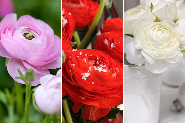 Ranunculus provides a much-needed splash of late colour, says John Hiorns