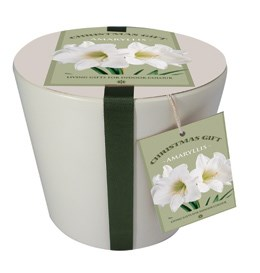 Ceramic pot & amaryllis 'Christmas Gift' gift set (Hippeastrum 'Dancing Queen' gift set)