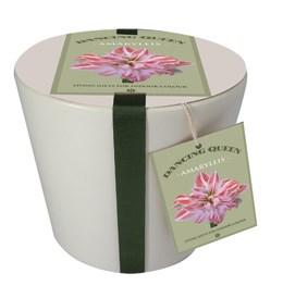 Ceramic pot & amaryllis 'Dancing Queen' gift set (Hippeastrum 'Dancing Queen' gift set)