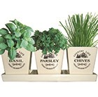 Ceramic windowsill herb gift set