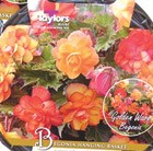Golden begonias and hanging basket gift set