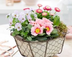 Spring flowers in pink (a potted collection for spring - pink)