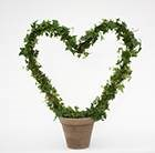 Hedera Heart in clay pot