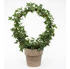 Hedera arch in clay pot