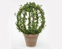 Hedera orb in clay pot (Ivy orb in clay pot)