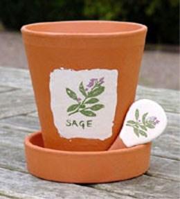 Herb kit - parsley