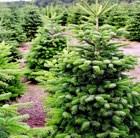 1.75-2m-christmas-tree-and-stand