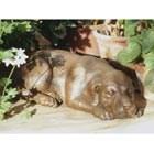 bronze-puppy