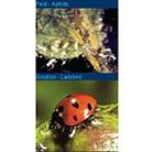 ladybird--lava-aphid-control