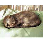 long-haired-bronze-cat