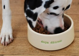 Handmade dog's dinner bowl