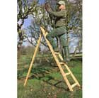 Beech orchard ladder