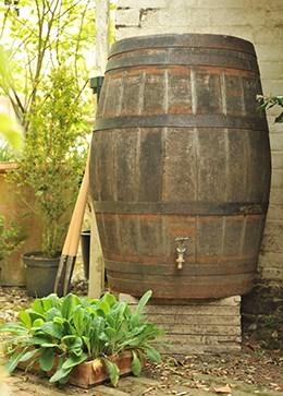 Oak whiskey barrel - water butt