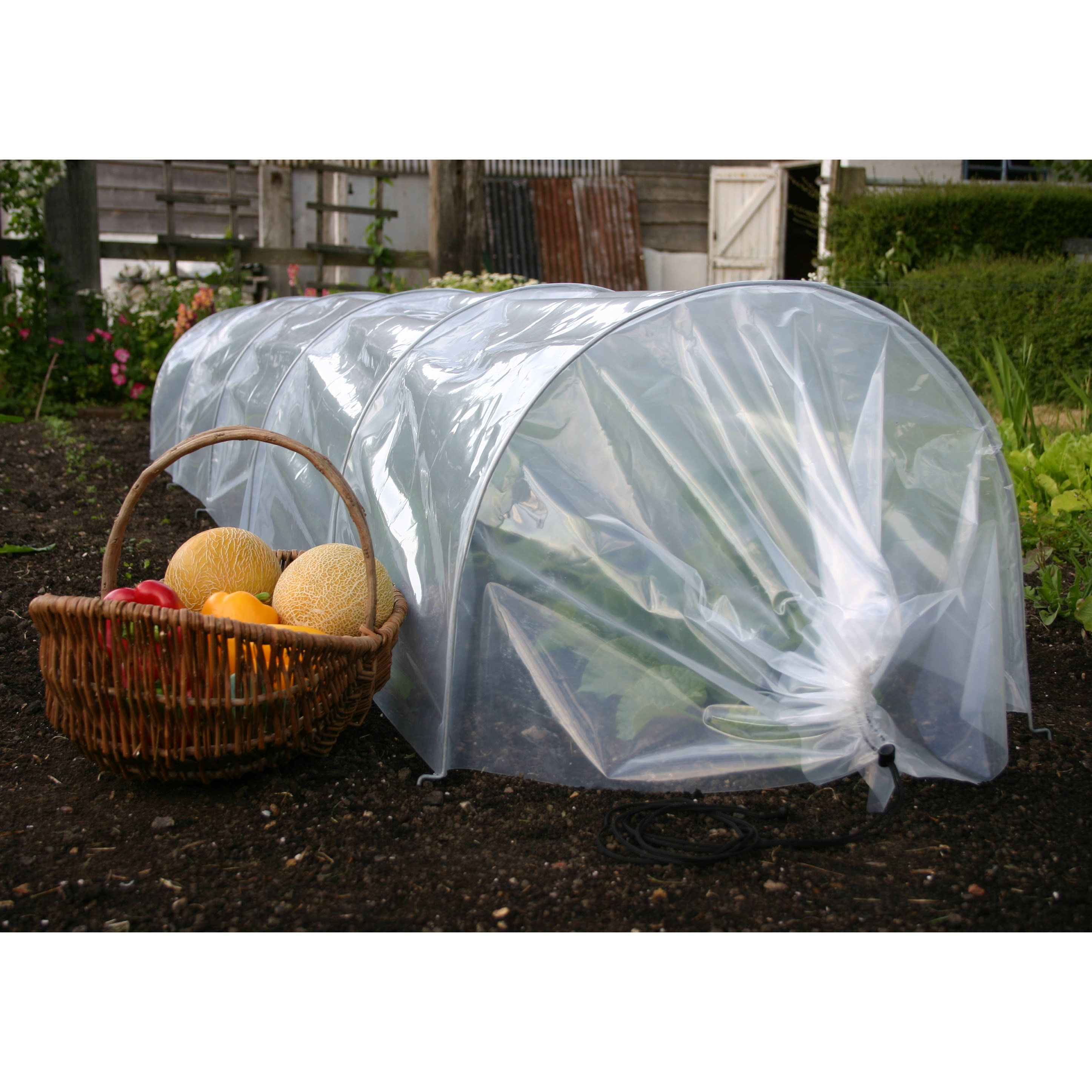Large polytunnel cloche