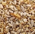 robin-food-2-kg
