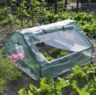 cold-frame-greenhouse