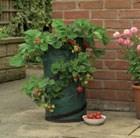 strawberry-planting-bag
