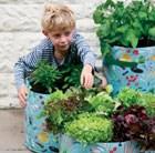 childrens-vegetable-patio-planter