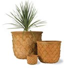 pineapple-pot