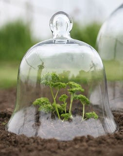 Victorian style glass bell jar - small