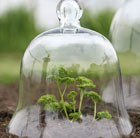 Victorian style glass bell jar