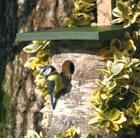 birch-log-hole-nest-box
