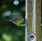 jumbo-heavy-duty-seed-feeder