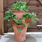 strawberry-planter