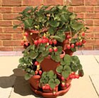 3-tier-strawberry-herbs-planting-tower