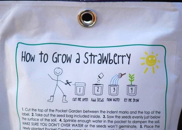Strawberry - children's grow pack