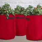 tomato-bush-and-trailing-patio-planters