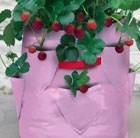 strawberry-patio-planters