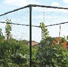 small-crop-cage