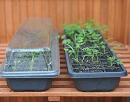 Windowsill seed and plant raising kit
