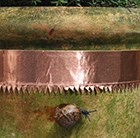 copper-snail-and-slug-tape