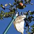telescopic-fruit-picker