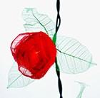 rose-bud-lights