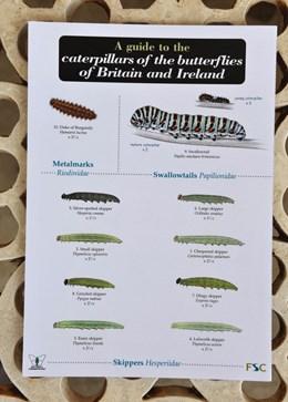 Field guide - caterpillars