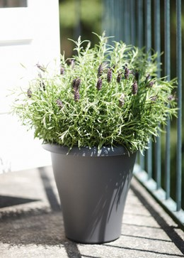 Tall plastic pot