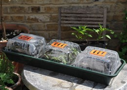 Windowsill trio propagator