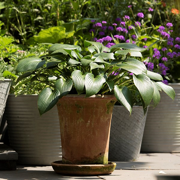 Flared rim terracotta pot