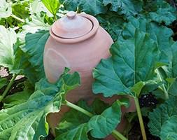 Terracotta rhubarb forcer