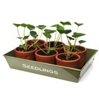 Seedlings and cuttings tray