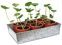 Patterned galvanised seed tray