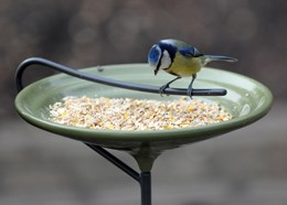Stake bird bath and feeding bowl