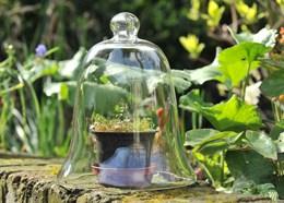 Classic glass bell cloche