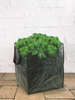 Extra large potato planting bags