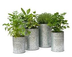 Galvanised metal planters