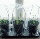 Propagro grow bags and frame